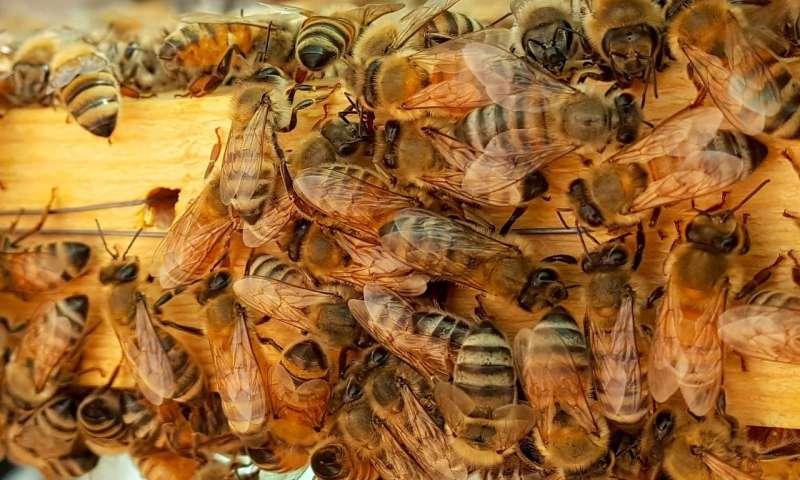 محصولات زنبورعسل
